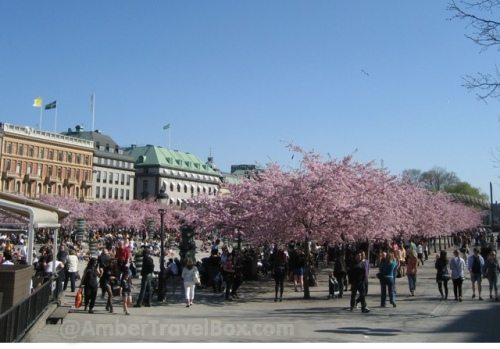 Stockholm. Blossom Trees at the Kunstradgarden